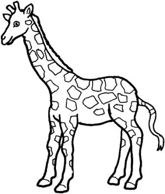 Dibujos de jirafas  JIRAFAPEDIA